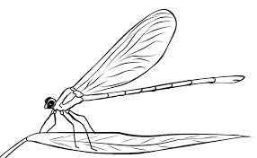 Small Picture FREE Dragonfly Coloring Page 2