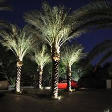 lighting palm trees fun tropical outdoor lighting. i love spot lighted palm trees they remind me of florida which will always be home to find this pin and more on outdoor solar lighting fun tropical