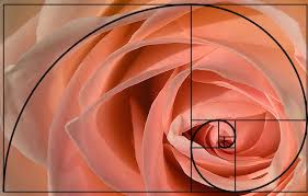 The golden ratio in nature. Phi, the golden ratio, also known as divine