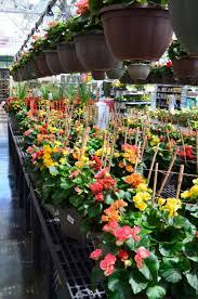 container plants gertens garden center nursery
