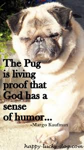 Funny Dog Quotes Simple Funny Dog QuotesTime For A Break