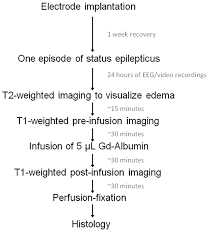 Experimental Protocol Flow Chart