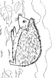 Hedgehog Coloring Page Animals Town Animal Color Sheets Hedgehog