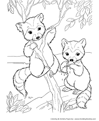 Small Picture Bandit face raccoon Coloring Pages Raccoon Coloring Page and