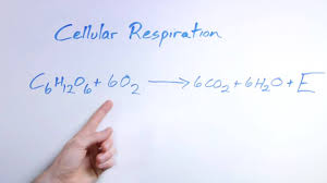 biology organic chemistry what is the equation for respiration you