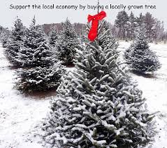 Deck The Halls Christmas Tree Farms Of Southeast Michigan  Metro Local Christmas Tree Lots
