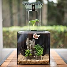 office desk fish tank. Office Desk Aquarium Fish Tank