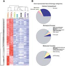 Identification Of Genes Upregulated In Pluripotent Cells A