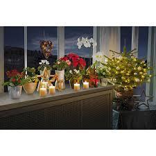 Weihnachtsstern Rot Topf ø Ca 13 Cm Euphorbia Pulcherrima