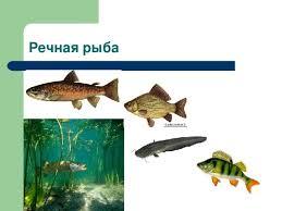Приготовление блюд рыбы технология девочки презентации Речная рыба