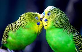 2560x1600 love birds
