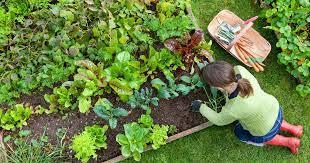 12 best raised garden beds in 2021