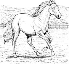 Realistic Horse Coloring Pages Interesting Running Mare Page Free