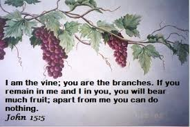 Image result for https://Google images christ the true vine scriptures