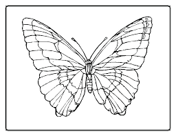 Outline Butterfly Love Outline Of Butterfly To Color Coloring Page