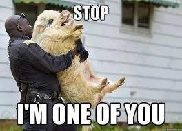 Image result for animal memes