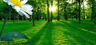beautiful background images nature. Modren Beautiful Tree Garden Grass Landscape Background Underbrush Meadow Lawn Background  Image Throughout Beautiful Images Nature R