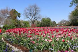 file the dallas arboretum and botanical garden jpg
