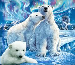 """Résultat de recherche d'images pour """"gifs ours blancs"""""""