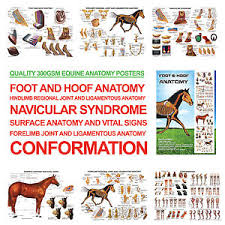 Details About Foot And Hoof Horse Anatomy A3 Posters For Farriers Farriery Vets Rrp 24 99