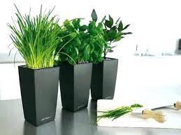 feng shui plant office. Office Feng Shui Plants. Plants In Living Room Best For Good Elegant Plant A