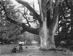 Znalezione obrazy dla zapytania oak tree touched by the thunder black and white