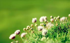 desktop background hd flowers. Perfect Desktop Flowerhdwallpaperbackgrounddownload In Desktop Background Hd Flowers S
