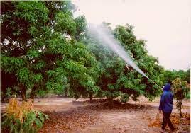 mix fertilizers for foliar feeding