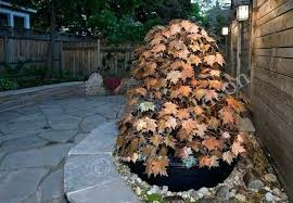 copper water fountain outdoor chic design 7 maple leaves garden fountains