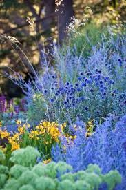 Small Picture 1042 best Plant combinations images on Pinterest Garden plants