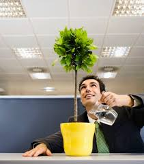 office pot plants. \u0027Territorial\u0027: BBC Bosses Have Banned Pot Plants From The Office (file Photo. \u0027 A