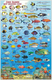 Samoan Fish Chart Cook Islands Dive Map Coral Reef Creatures Guide Franko