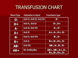 Image Result For Blood Transfusion Chart Blood Chart Diagram