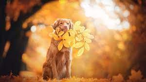 Fall dog photos ...