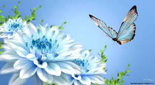 Wallpaper Hd Nature Flower