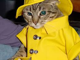 best fotos de gatos divertidos images animals inspirational picture yellow clothing for cats pets hat fashion your favorite picture