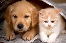 Resultado de imagem para adoção de animais