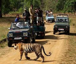 Image result for Gypsy Safari Ranthambore