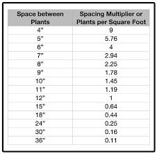 Pachysandra Planting Spacing Guide