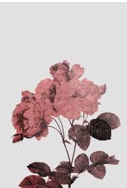 Flowers, Roses, Wallpaper - Rose Gold ...