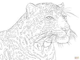 Small Picture Portrait of Indian Leopard coloring page Free Printable Coloring