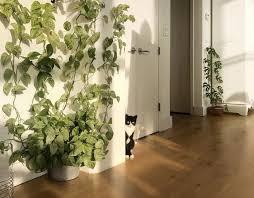 climbing plants safe for pets leaf