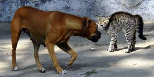 cats and dogs play fighting. Throughout Cats And Dogs Play Fighting