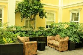 Indoor Plants For Home And Offices  Art Fair ArtistsDecorative Plants For Home