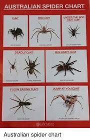 Australian House Spiders Chart Australian Spider Chart Under The Bog Big Cunt Cunt Seat