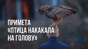 <b>Птица</b> накакала на <b>голову</b> женщине или ребенку: что означает ...