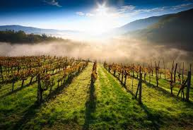 wine tours in tuscany 4 itinerary