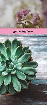 gardening leave_2_20180808060459_53 thursday meme for kids, home ...