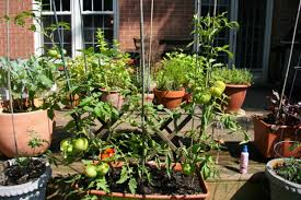 Urban Container Flower And Vegetable Gardening With Recycled ...