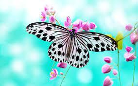 Wallpapers Butterflies (64+ background ...